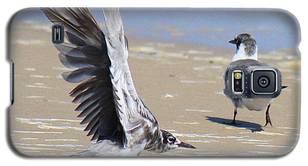 Skiddish Black Tern Galaxy S5 Case