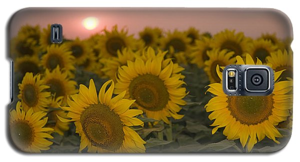 Skn 2178 The Sunflowers At Sunset  Galaxy S5 Case by Sunil Kapadia