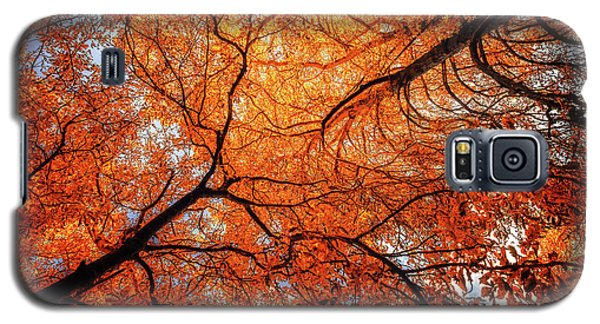 Sky Roots In Forest Red Galaxy S5 Case by John Williams