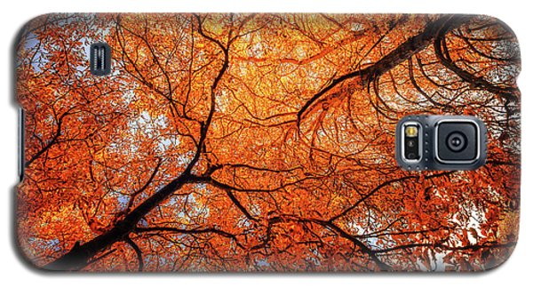 Sky Roots In Forest Red Galaxy S5 Case