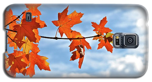 Sky View With Autumn Maple Leaves Galaxy S5 Case