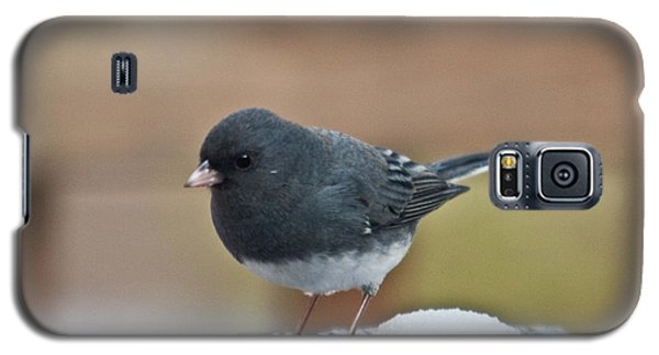 Slate Junco Feeding In Snow Galaxy S5 Case
