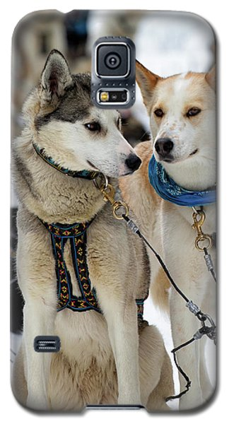 Sled Dogs Galaxy S5 Case