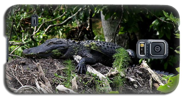 Sleeping Alligator Galaxy S5 Case
