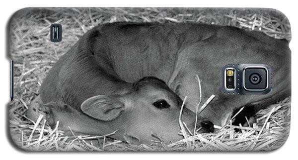 Sleeping Calf Galaxy S5 Case