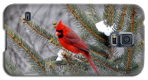 Galaxy S5 Case featuring the photograph Sleeping Cardinal by Brenda Bostic
