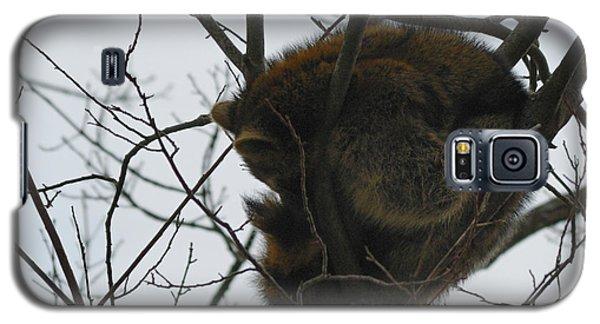 Sleeping Coon Galaxy S5 Case