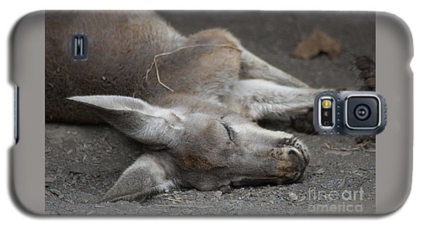 Sleeping Joey 20120714_65a Galaxy S5 Case