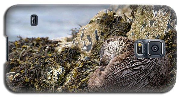 Sleeping Otter Galaxy S5 Case