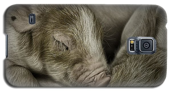 Sleeping Piglet Galaxy S5 Case