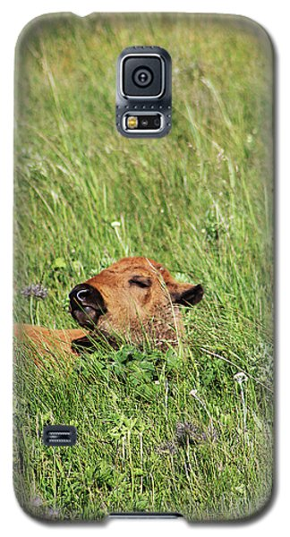 Sleepy Calf Galaxy S5 Case
