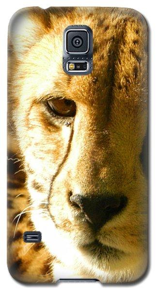 Sleepy Cheetah Cub Galaxy S5 Case by Emmy Marie Vickers