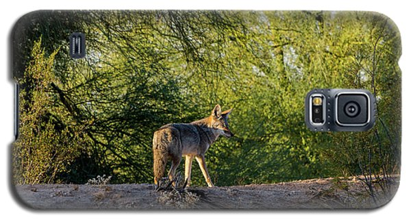 Sleepy Coyote Galaxy S5 Case