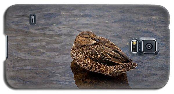 Sleepy Duck Galaxy S5 Case by Arthur Dodd