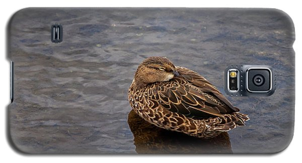 Sleepy Duck Galaxy S5 Case
