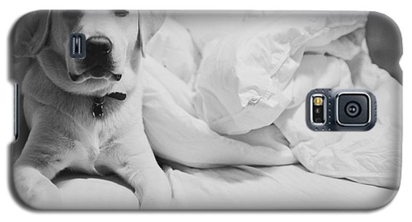 Galaxy S5 Case featuring the photograph Sleepy Labrador by Louise Fahy