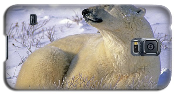 Sleepy Polar Bear Galaxy S5 Case