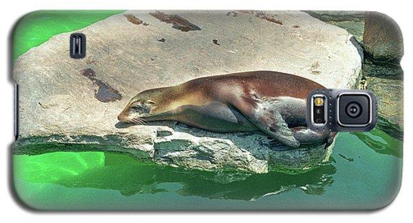 Sleepy Sea Lion Galaxy S5 Case