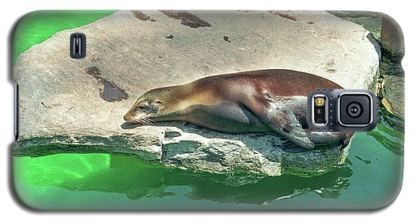 Sleepy Sea Lion Galaxy S5 Case