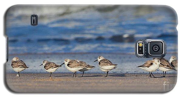 Galaxy S5 Case featuring the photograph Sleepy Shorebirds by Michelle Wiarda