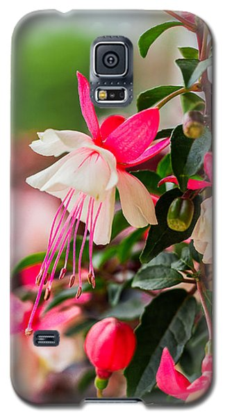 Slice Of Asian Garden Galaxy S5 Case