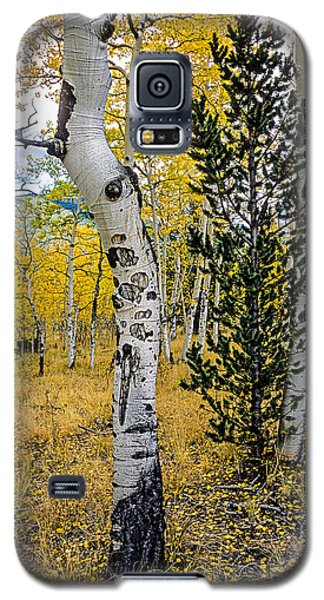 Slightly Crooked Aspen Tree In Fall Colors, Colorado Galaxy S5 Case