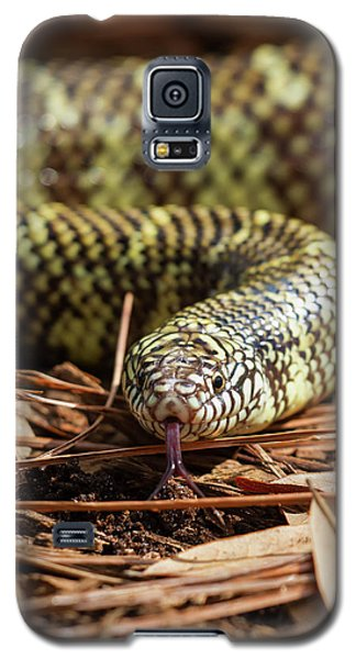 Galaxy S5 Case featuring the photograph Slither Snake by Arthur Dodd