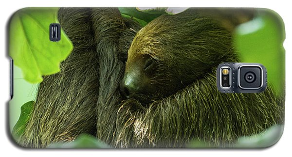 Sloth Sleeping Galaxy S5 Case