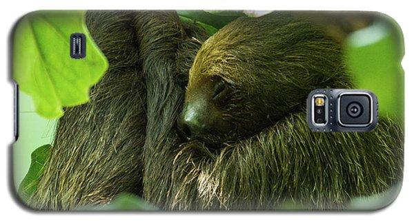 Sloth Sleeping Galaxy S5 Case