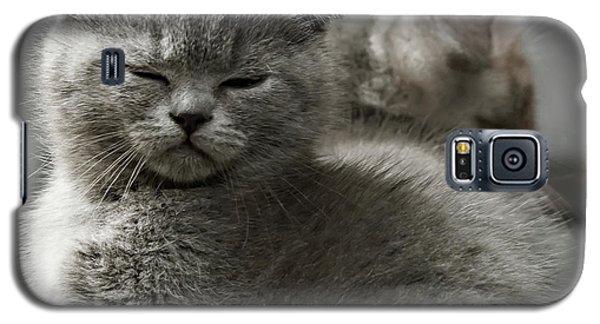 Slumbering Cat Galaxy S5 Case by Evgeniy Lankin
