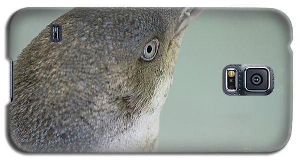 Small Blue Penguin  Galaxy S5 Case