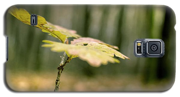 Small Branch With Yellow Leafs Close-up Galaxy S5 Case