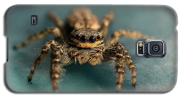 Small Jumping Spider Galaxy S5 Case