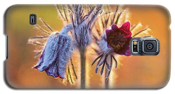 Small Pasque Flower, Pulsatilla Pratensis Nigricans Galaxy S5 Case