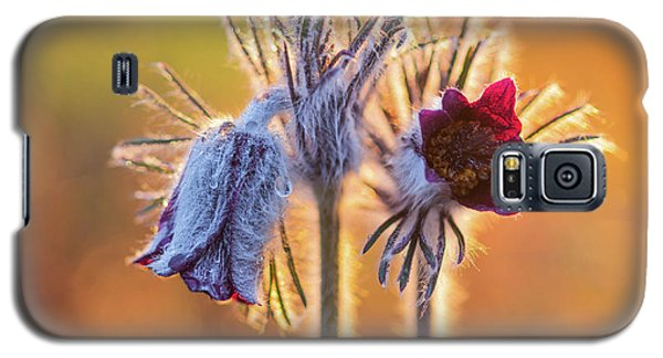 Small Pasque Flower, Pulsatilla Pratensis Nigricans Galaxy S5 Case