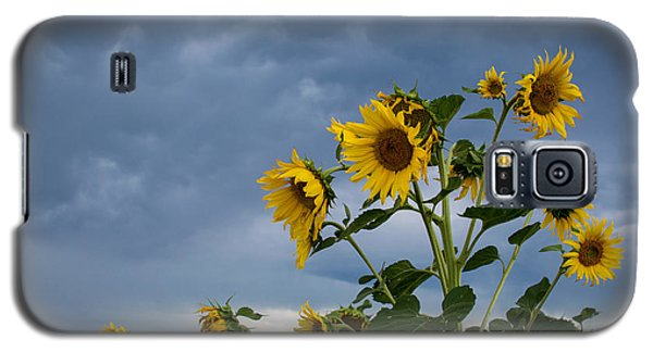 Small Sunflowers Galaxy S5 Case