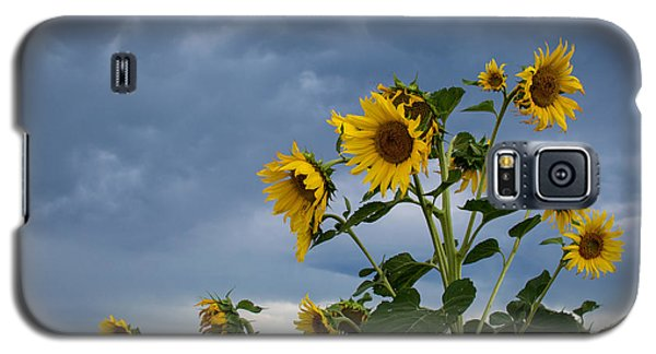 Small Sunflowers Galaxy S5 Case
