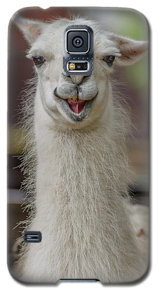 Smiling Alpaca Galaxy S5 Case by Greg Nyquist
