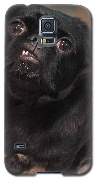 Smiling For Treats Galaxy S5 Case by Paula Brown
