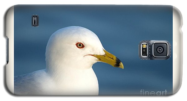 Smiling Seagull Galaxy S5 Case