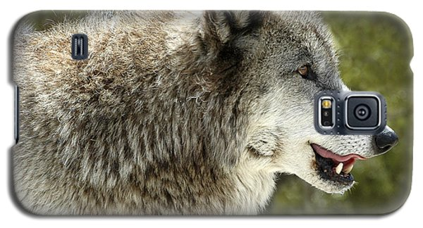 Smiling Wolf Galaxy S5 Case