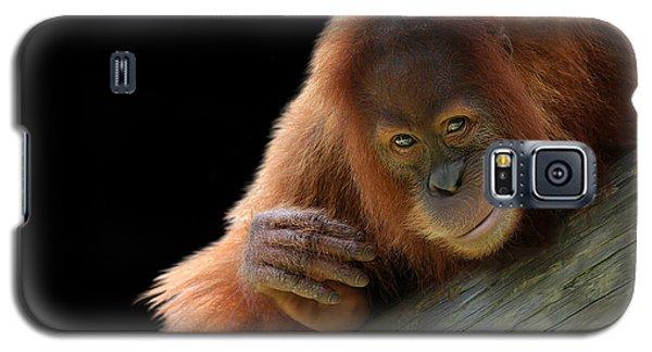 Cute Young Orangutan Galaxy S5 Case