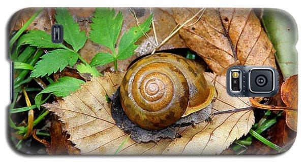 Snail Home Galaxy S5 Case