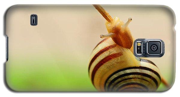 Snail  Galaxy S5 Case by Joe  Ng