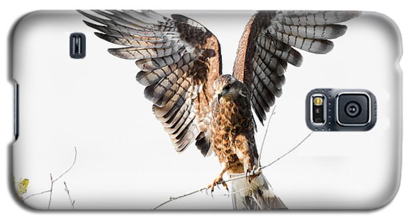 Snail Kite Exposed Galaxy S5 Case
