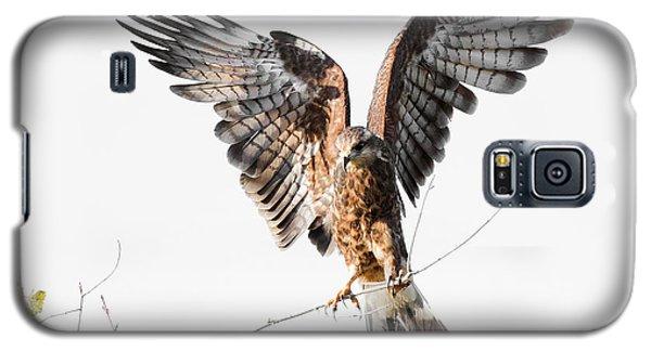 Snail Kite Exposed Galaxy S5 Case