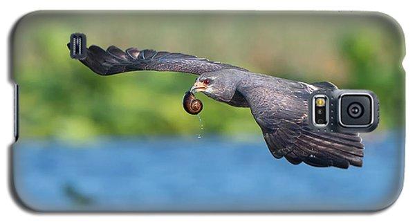 Snail Kite Returning Galaxy S5 Case