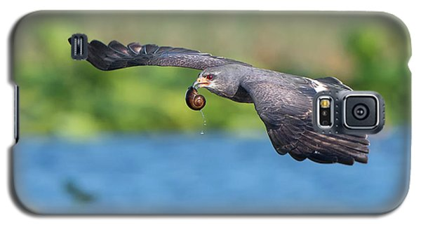 Snail Kite Returning Galaxy S5 Case