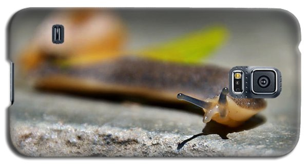 Snail Searching For Shell Galaxy S5 Case