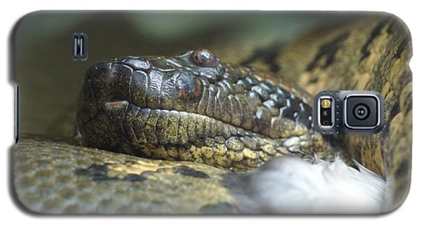 Galaxy S5 Case featuring the photograph Snake by Heidi Poulin